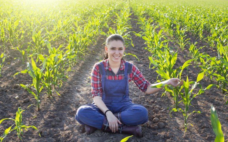 Maximizing Crop Yield