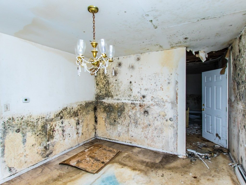mold growing in an abandoned house