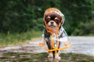 a doggo in a raincoat