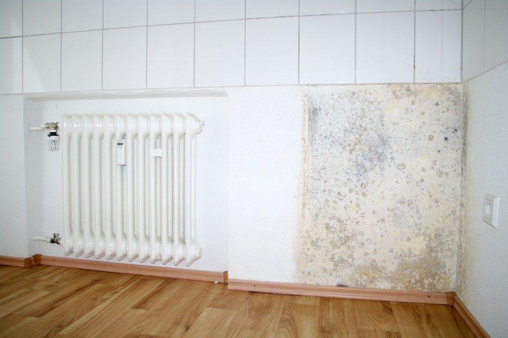 Mold growing on wall