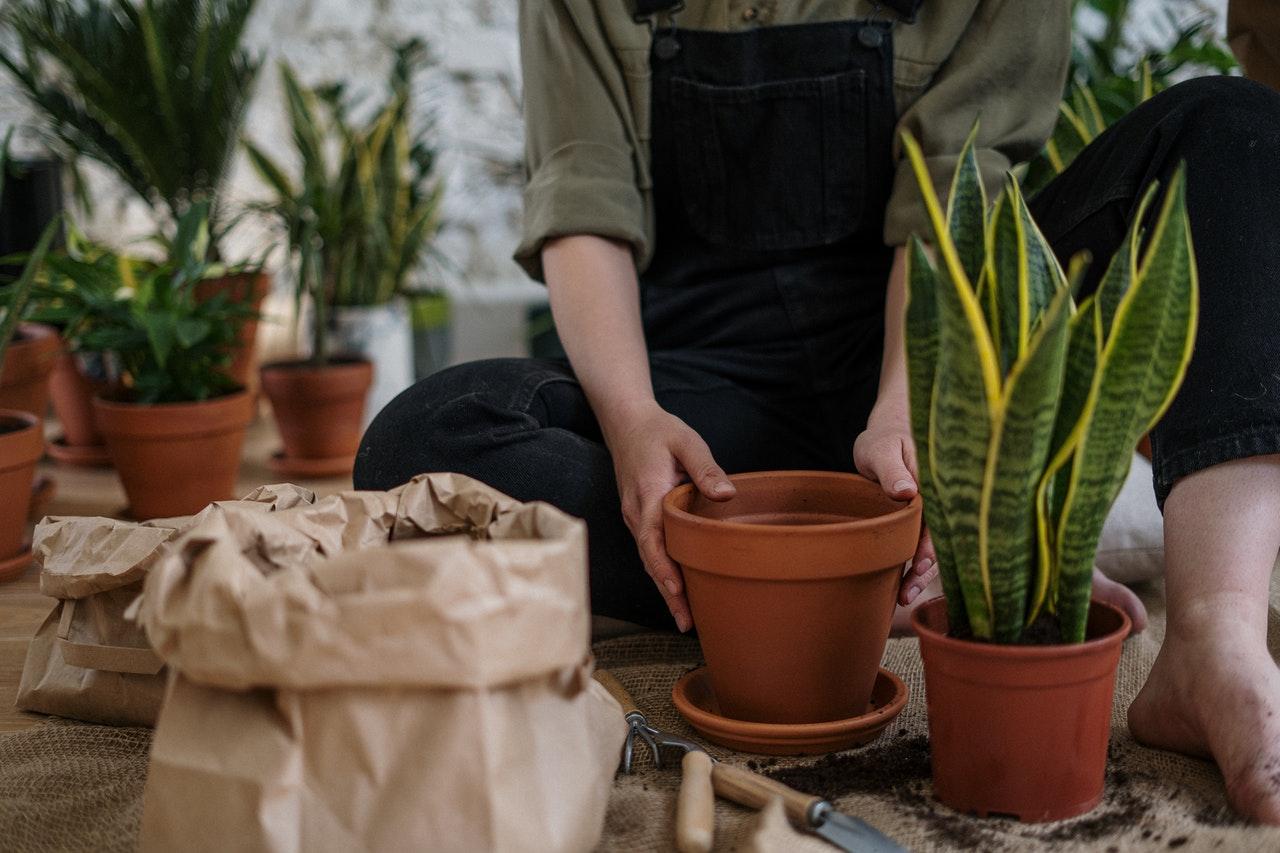 woman planting