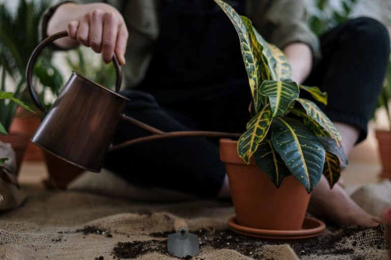 person watering a plant